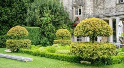 кустарники для оформления сада