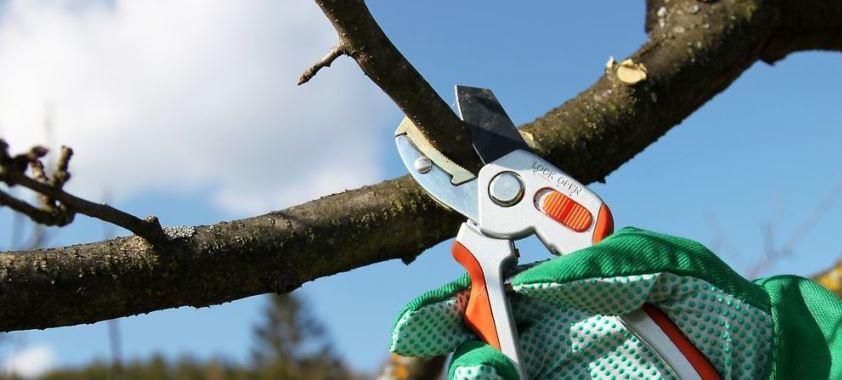 сроки обрезки плодовых деревьев весной, летом, осенью, зимой