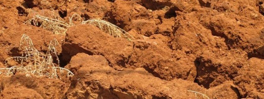 глинистый вид почвы