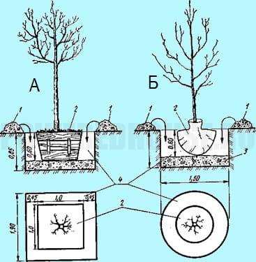 как сажать деревья с комом земли