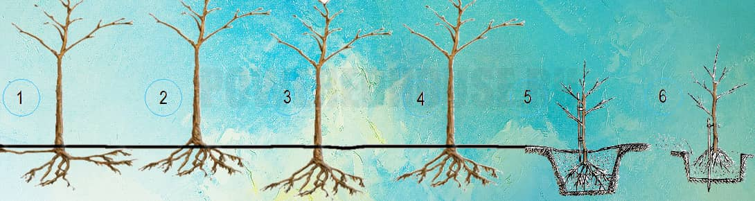 ошибки при посадке деревьев