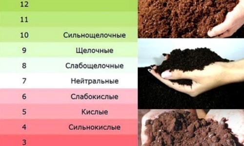 кислотность почвы по цвету