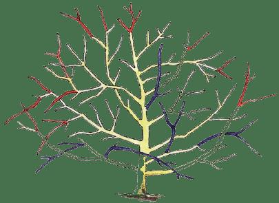 основные приемы обрезки деревьев