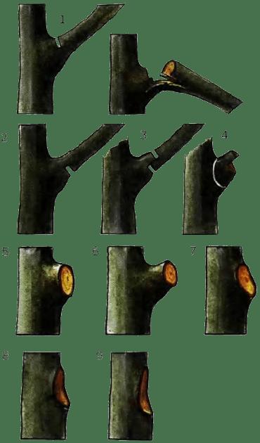 техника вырезки крупных ветвей