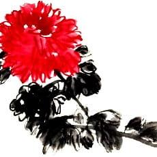 хризантема в фэн шуй