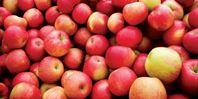 яблоки, хранение в холодильнике продуктов
