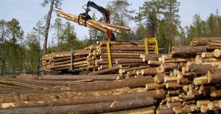 роль и значение дерева в строительстве