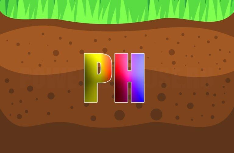 кислотность почвы на участке