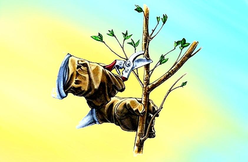 обрезка деревьев - правила и приемы